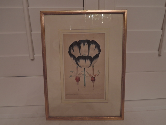 Antique Botanical Picture D. Hayes Dated 1843 Hand Colored Litho Framed w/Glass