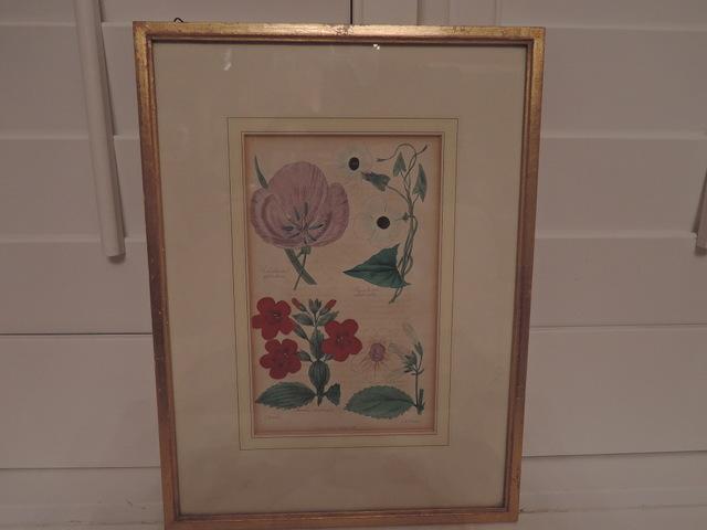 Antique Botanical Picture J & J Parkin Dated 1836 Hand Colored Litho Framed w/Glass