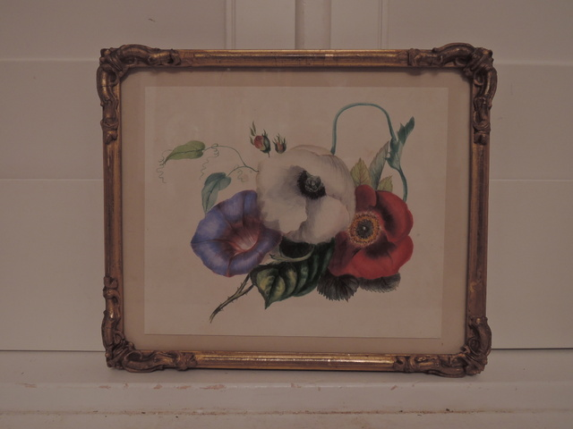 19th C. Framed English Watercolor Botanical Painting Roses Poppies Morning Glory
