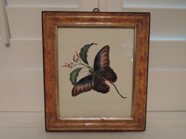 Antique English Butterfly Botanical Watercolor Painting c.1840