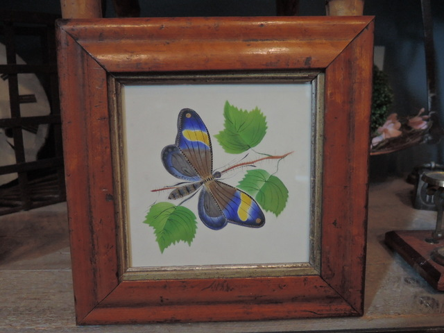 Antique English Botanical Butterfly Watercolor Painting c.1835 Maple Frame