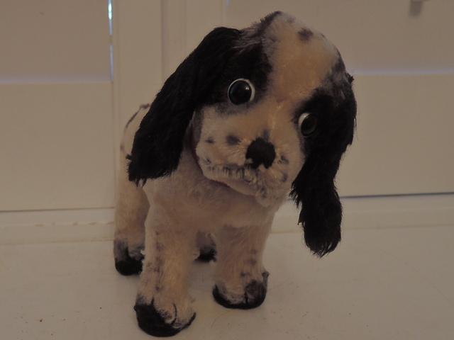 Vintage Steiff English Cocker Spaniel Dog 4276/19 Button & Tagged 1960's
