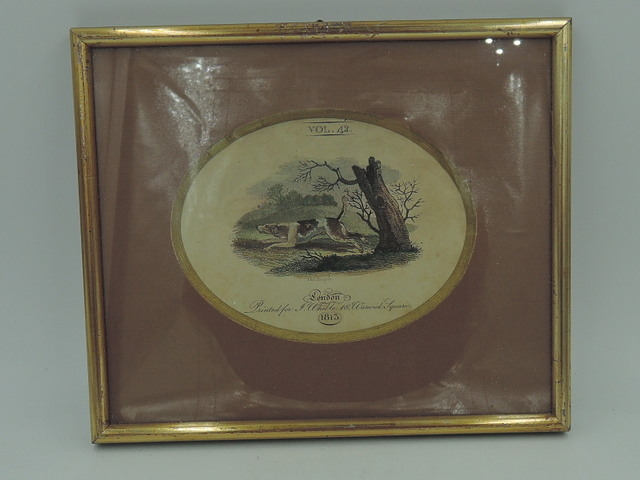 Antique Hand Colored Engraving The Beagle Dog J. Wheble Print 1812 Framed